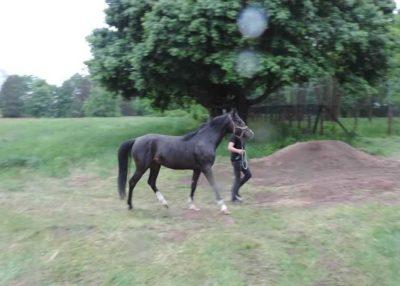 Porzucone konie