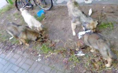 Interwencja w podwarszawskiej miejscowości
