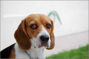 ustawa o ochronie zwierząt