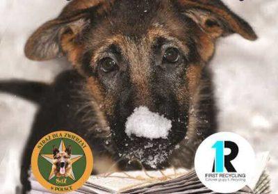 Akcja Pomóż Zwierzętom Przetrwać Zimę