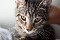 kot-do-adopcji-Fabian