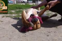 zabawki-dla-psow