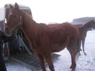 Biznesmen porzucił konie…