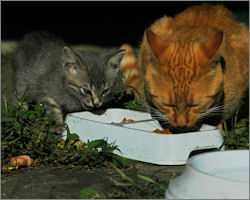 Akcja Pełny Brzuszek – pomoc w dokarmianiu kotów wolnobytujących