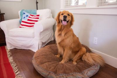 Główne rodzaje guzów u psów
