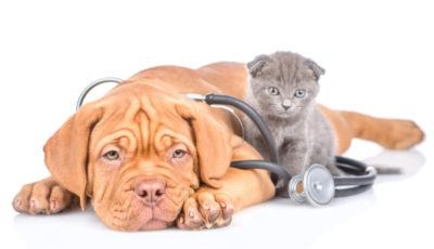 Kiedy wykonuje się badanie krwi i moczu u psów i kotów?