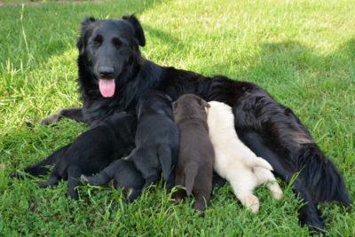Najczęstsze schorzenia ginekologiczne u psów