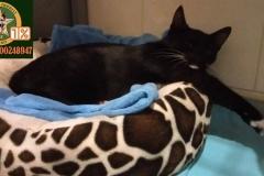 adopcja-kota