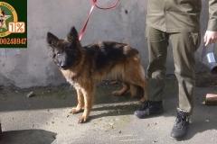 karmienie psow (1)